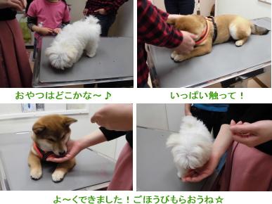 診察台の上で犬のしつけトレーニング